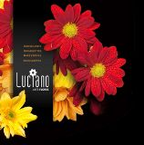Luciano - Arte Flores, Lda. Maia